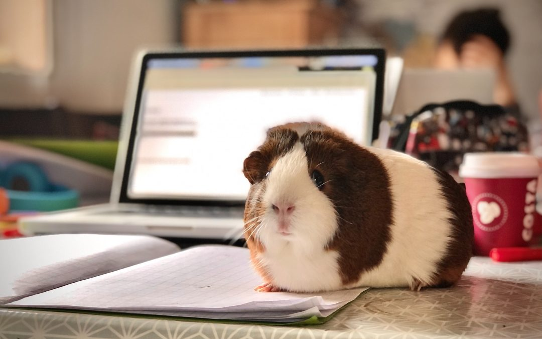 From Guinea Pigs to Guinness – how do we rise to the challenge of meaningful engagement?